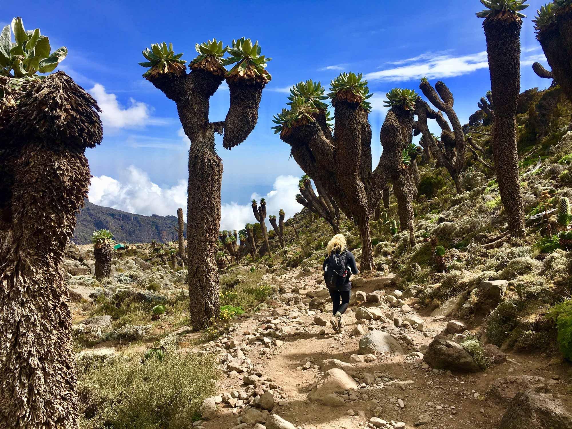 Trekking en route to Mount Kilimanjaro